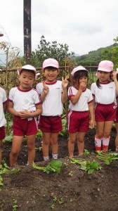 上宮保育園芋植え